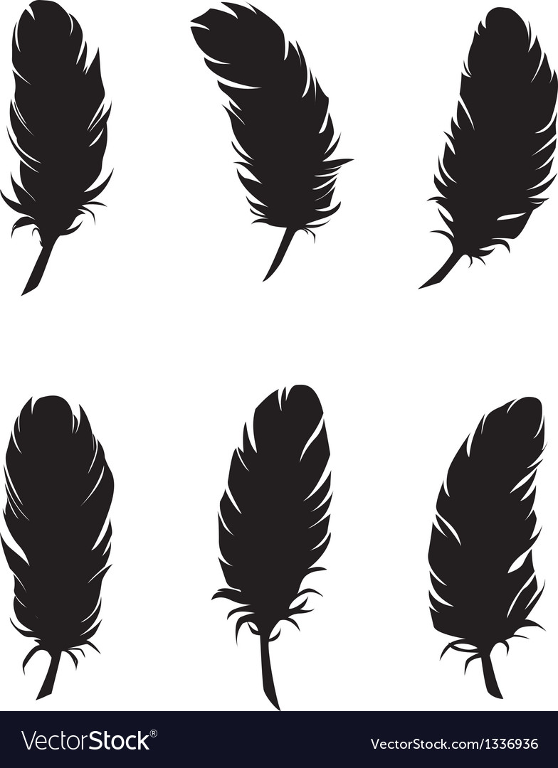 Feathers for design and decoration vector