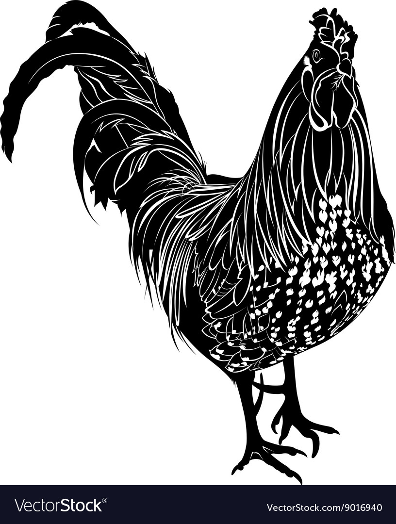 Cock rooster vector