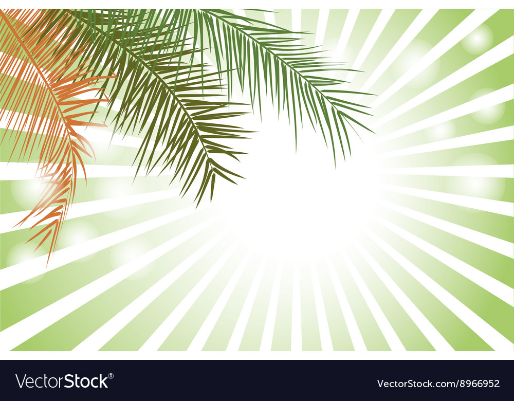 Palm leaf or coconut leaf background vector