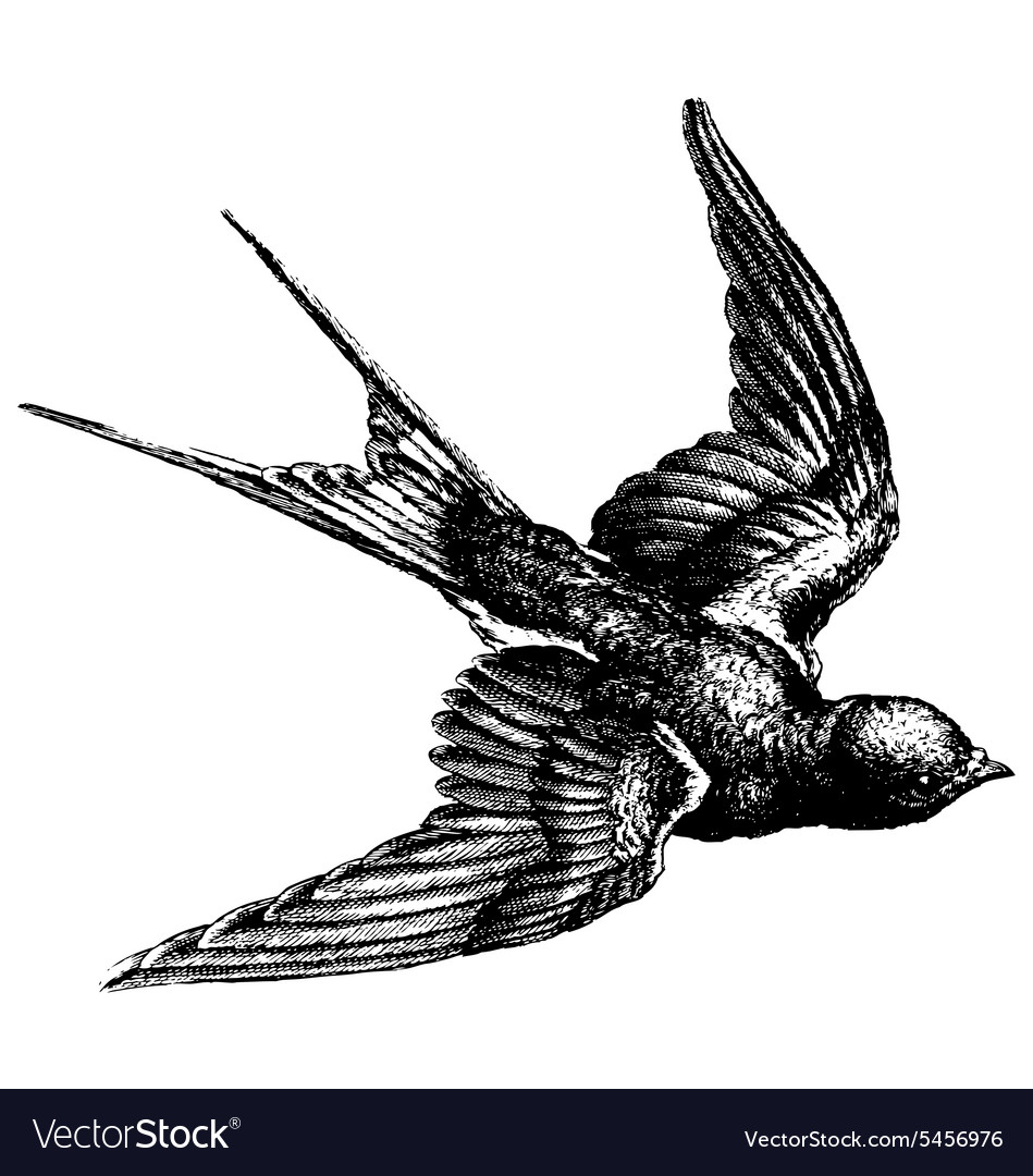 Swallow engraving vector