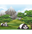 Pandas in forest vector image