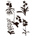 Silhouettes of Orchid Flowers vector image