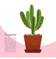 saguaro indoor plant in pot banner vector image