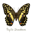 Butterfly Papilio Demodocus Watercolor imitation vector image vector image