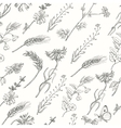 Seamless pattern with wild plants on a white vector image