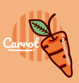 carrot vegetable cartoon vector image