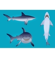 Hungry agressive and scary shark fish vector image