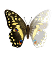 Butterfly Papilio Demodocus Unfinished Watercolor vector image vector image