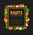 nut banner with kernel and shell sign vector image