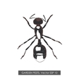 Detailed drawing ant on white background vector image