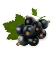 fruit black currant vector image