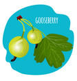 gooseberry with green leaf on blue background vector image