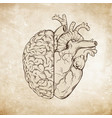 human brain and heart halfs over grunge aged paper vector image