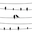 Birds on wires1 vector image