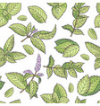 green leafs of fresh mint seamless pattern vector image