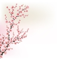 Blooming Cherry Blossom Branches card EPS 10 vector image vector image