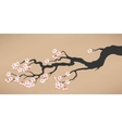 Branch of blooming cherry vector image vector image