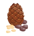 Brown pine cone isolated on white background vector image