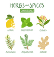 Herbs and spices collection 2 vector image