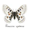 Butterfly Parnassius Apollonius Watercolor vector image