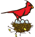 Cardinal Nest vector image vector image