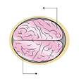 sections of human brain vector image