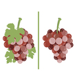 Grape Bunches of grapes vector image