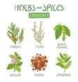 Herbs and spices collection 3 vector image vector image