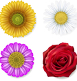 different flowers vector image