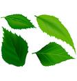 Tree Leafs vector image vector image