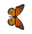 Top view of beautiful monarch butterfly isolated vector image