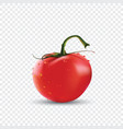 photo-realistic of red fresh vector image