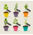 Herb garden with pots of herbs set 2 vector image vector image