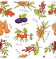 hand drawn seamless pattern with Berries vector image