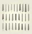 wheat and rye spikelet collection in different sty vector image vector image