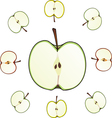 apple cut vector image
