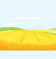 farm field of wheat vector image