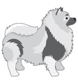 Keeshond vector image vector image