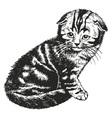 Fold kitten vector image
