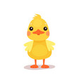 cute little yellow duck chick character cartoon vector image