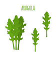 arugula leafvegetarian green vegetableflat style vector image