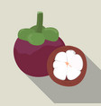 mangosteen isolated mangosteen icon vector image