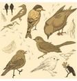 Set of handdrawn birds vector image