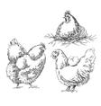 Chiken sketches vector image