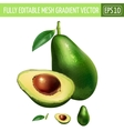 Avocado on white background vector image