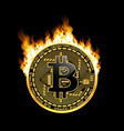 crypto currency bitcoin golden symbol on fire vector image