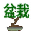 japanese bonsai tree in the form of hieroglyphs on vector image