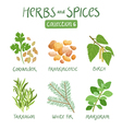 Herbs and spices collection 6 vector image vector image