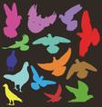 pigeon 1 vector image