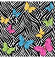 seamless background butterflies on zebra print vector image